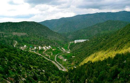 Площадь лесов в Кашкадарье увеличится на 3 тысячи гектаров
