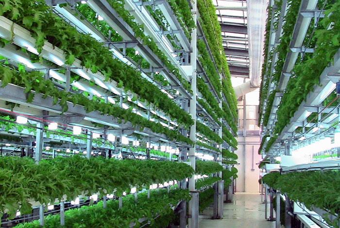 Появится ли технология «вертикального фермерства» в Кашкадарье?
