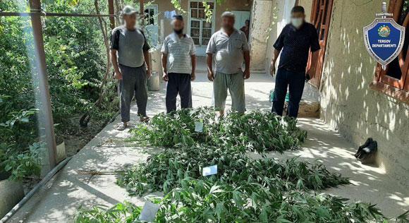 В Китабе уничтожили сад с наркотическими растениями