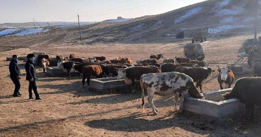 Чиракчинцы укрепляют лидерство в сфере животноводства