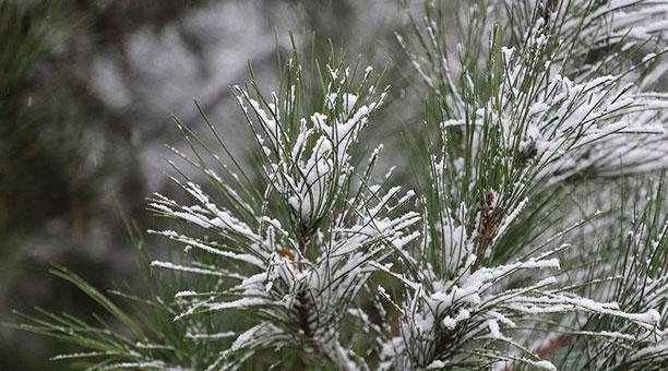 За неделю до лета в Кашкадарье выпал снег